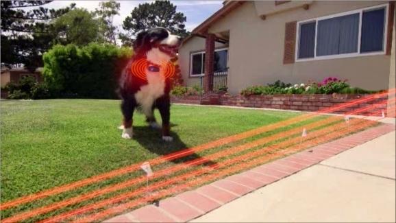 How to choose an electric dog fence choose a design solutioingenieria Choice Image